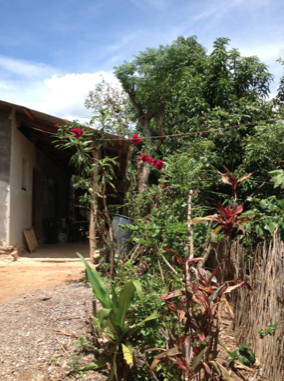 Their home in La Estanzuela. They grow Most of their food: the trees are dripping with avocados And mangos. They cultivate Maize and beans. They have chickens and pigs.